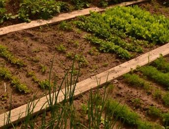 грядки огород выращивание