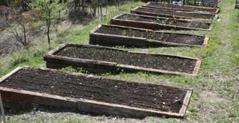 грядки огород