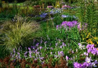 севооборот в огороде и саду
